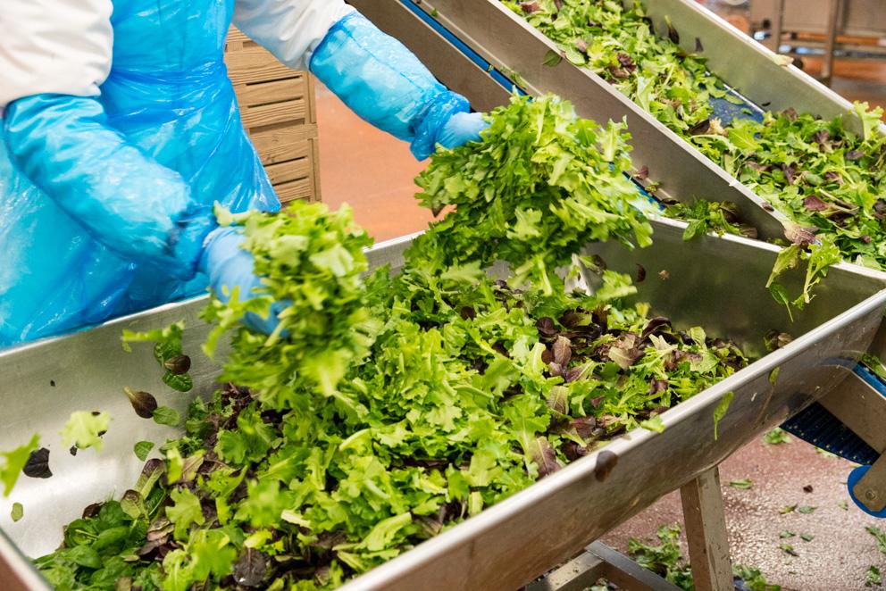 Bonduelle Salat Werk
